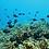 Thumbnail: PADI Rescue Diver