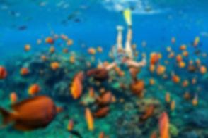 top-snorkeling-spots-in-malaysia.jpg
