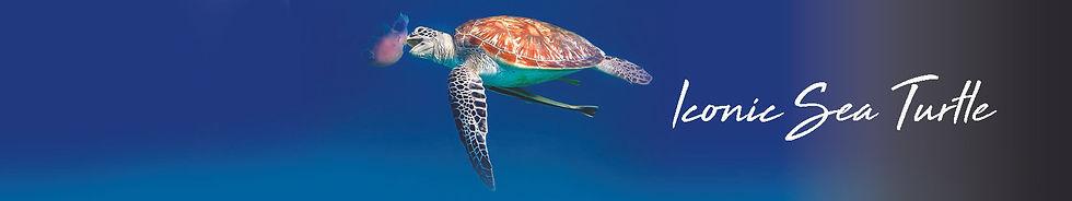 iconic sea turtle.jpg