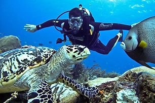 Deep-sea-diving-wallpaper.jpg
