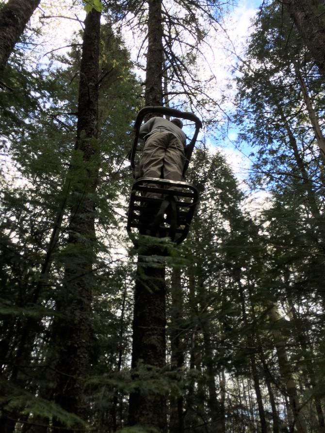 Brèves de chasse : L'ours noir au Québec (2ème partie)