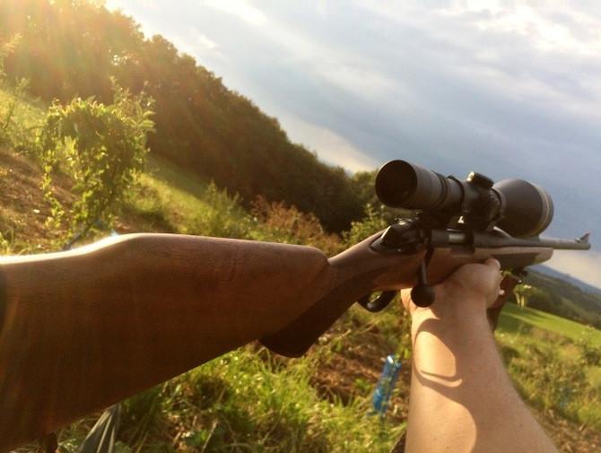Brèves de chasse : Mon premier  brocard à l'approche !