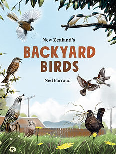 New Zealand's Backyard Birds is a children's guide to the birds that live in their backyard, both native birds, such as tūi, and pīwakawaka/fantail, and introduced birds such as thrush, blackbird and sparrow. With useful background information about birds in general and stunning illustrations by Ned Barraud, this book is an essential companion for every Kiwi child.