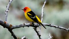 Bird-Watching-christmas-valley.jpg
