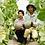 Thumbnail: 【2021年予約】栄木農園の雲仙グリーンメロン <特大玉6Lサイズ>1個入り (送料込・税込)