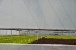 Vista Exterior del Invernadero