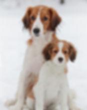 из графства де гамба, питомник собак, щенки энтлебухера