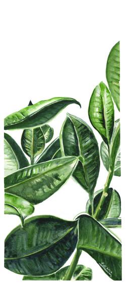 Planteetyden