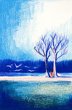 portfolio bird lake