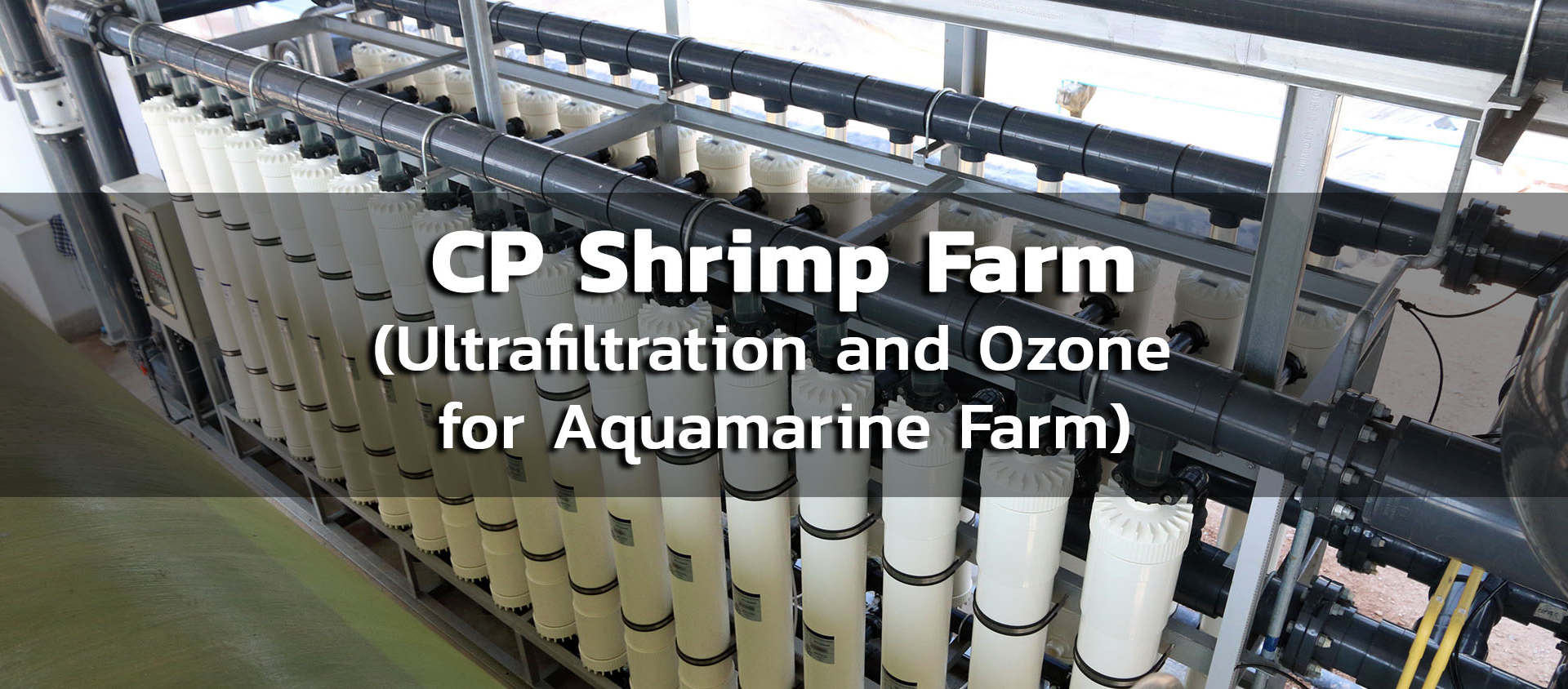 CP Shrimp Farm