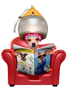 doginchair
