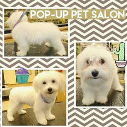 #popuppetsalon#petgrooming#dfw#tgecolonytx#frscotx#carrolltontx#dog #puppy #pup #cute #eyes #dogs_of