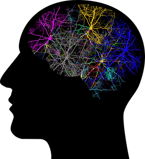 cranium-3244118.png