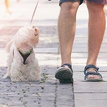 Community Canine Prep