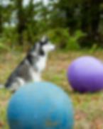 Intro to Treibball Balancing Wix.png