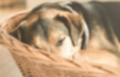 Find Your Dogs Off Switch Banner.jpg