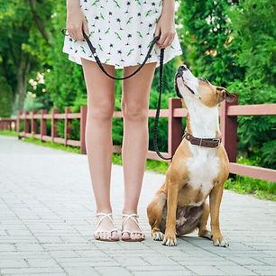 Family Dog III