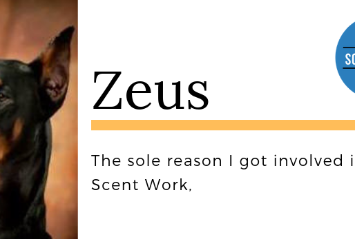 Why I Got Involved in Scent Work