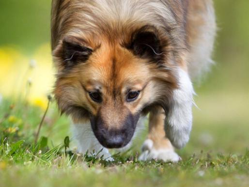 Online Dog Training WORKS!