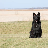 Family Dog II