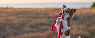 Handling Check-In: How Would You Rate Your Leash-Handling Skills?