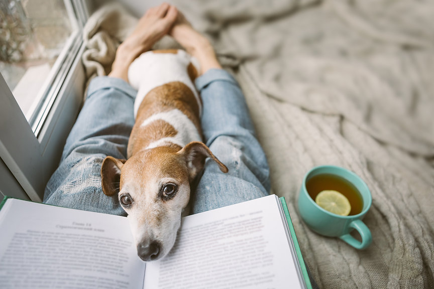 Reading at home with pet. Cozy home week