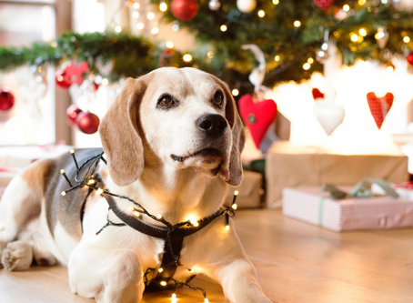 Holidays…Avoid Making Them Dreadful for Your Dog