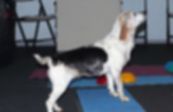Beginning Canine  Cond Banner.jpg