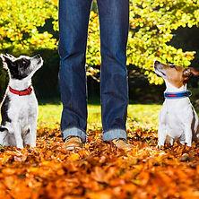 Canine Good Citizen Prep