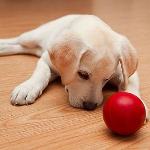 Puppy Social 101