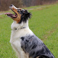 Family Dog I
