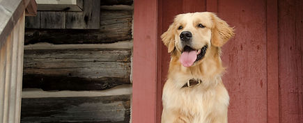 Three Essential Skills Every Dog Must Master Webinar