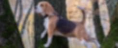 Canine Parkour Banner.jpg