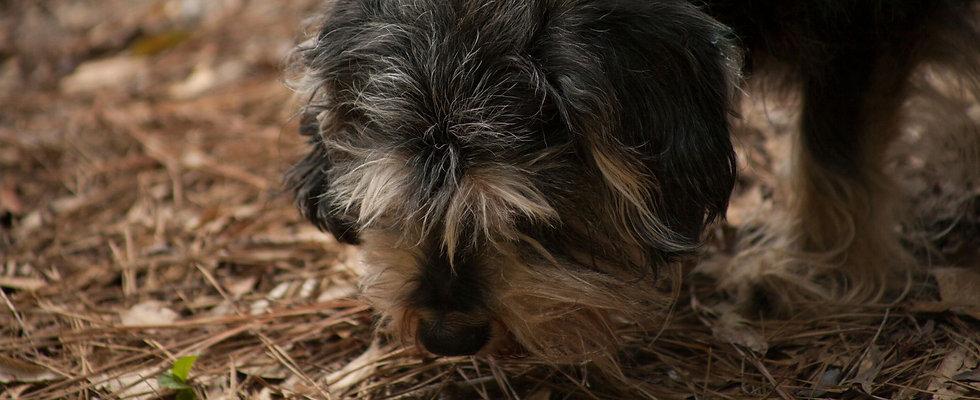 Puppy Sniffing Games Banner WIX.jpg