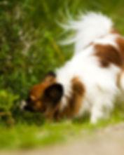 Foundation Sniffing Program Image.jpg