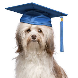 Scholarly Dog Program