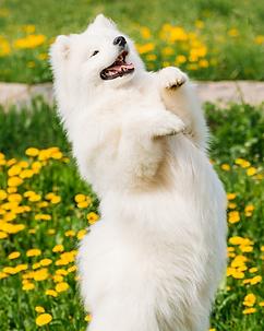 Novice Trick Dog Wix.png