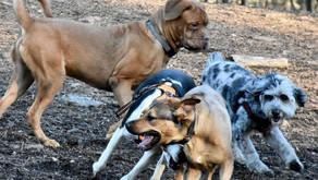 Dog Parks: A Go or A No?