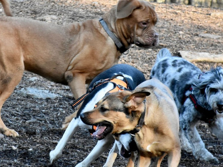 Dog Parks: A Go or A No?