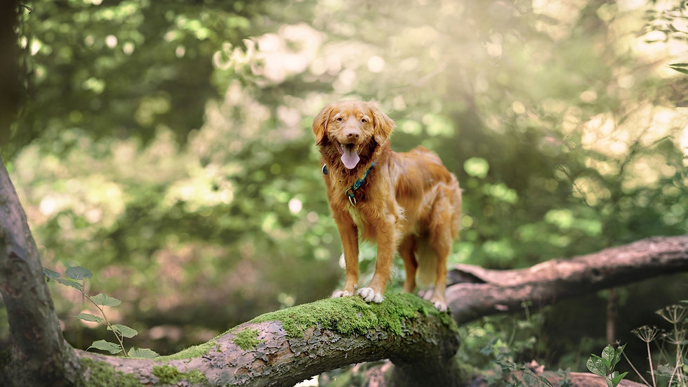 Canine Parkour Banner 2.jpg