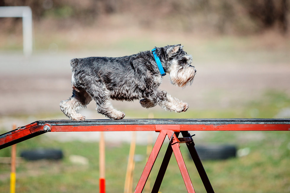 Dog agility.jpg
