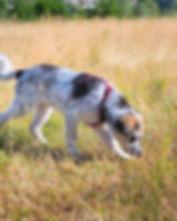 Puppy Sniffing Program Image.jpg