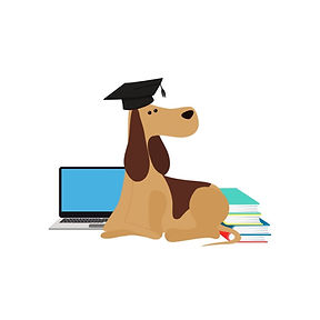 Dog with a graduation cap on