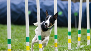 Choosing a Dog Sport: Which Sport and When