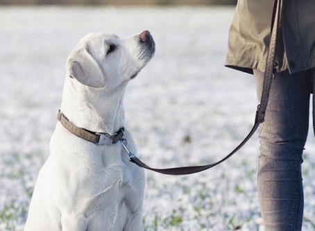Why Your Dog Needs Training