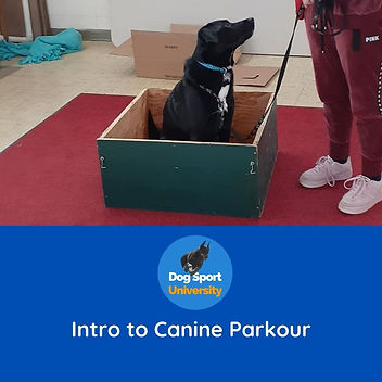 Intro to Canine Parkour.jpg