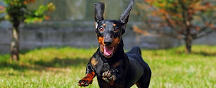 Handling Check-In: Does Your Dog Have Composed Excitement?