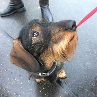 Urban Canine Prep