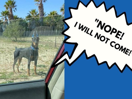 "My Puppy Said, ""NOPE!"""
