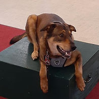 Canine Parkour Program